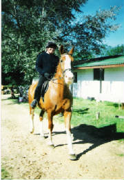 Fir Tree Farm Equestrian Centre